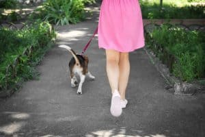 Woman in a pink skirt and white sneakers walking a beagle along a paved path. You see them from behind as they walk along.
